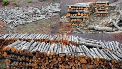 """Photo of Dibër: Procedohen penalisht 5 shtetas për """"Prerje të paligjshme të pyjeve""""."""
