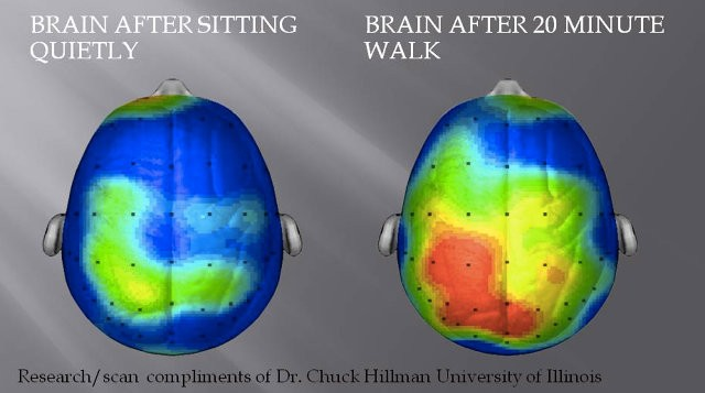 The brain before and after exercise