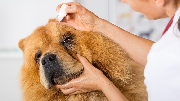 What Kind Of Eye Drops Can I Use On My Dog?