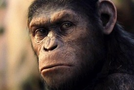 Caesar from Rise of the Planet of the Apes