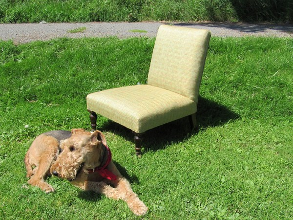 Victorian Nursing Chair with Maeve the 'Needle Rock' dog.