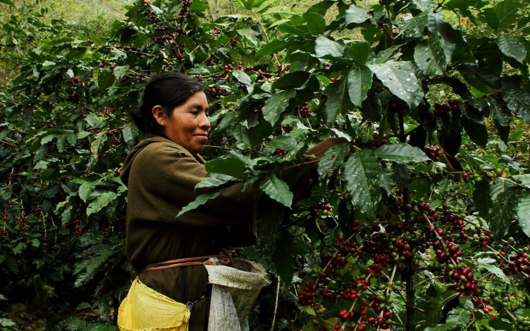 How Organic Coffee Improves Human and Environmental Health