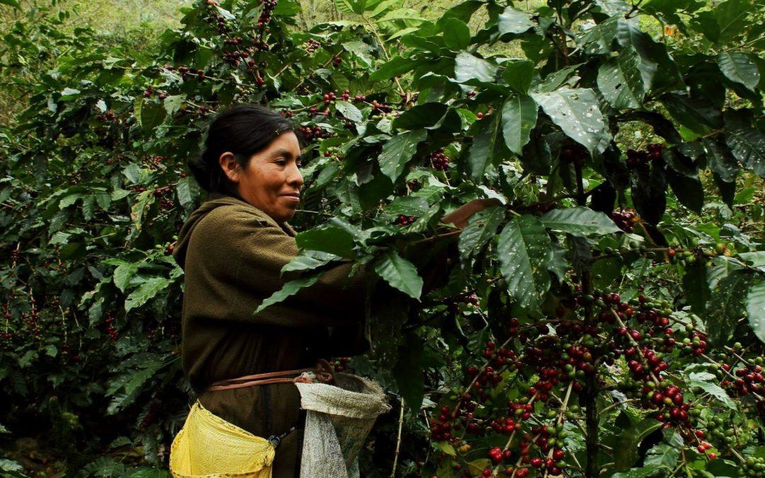 How Organic Coffee Improves Human and Environmental Health