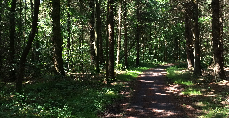 path through green woods