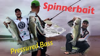 Fishing tips – Revenge spinnerbaits ( Pressured Bass)