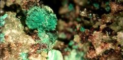 Malachite Crystal Flower - Copper Hill Gold Mine