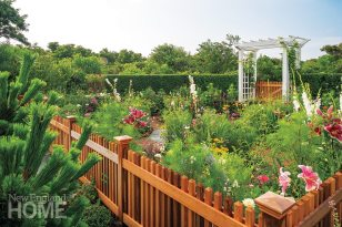 """Annuals crowd the cedar fence that contains the homeowners' """"secret garden."""" A dense honeysuckle hedge screens the fence between lawn and pool."""