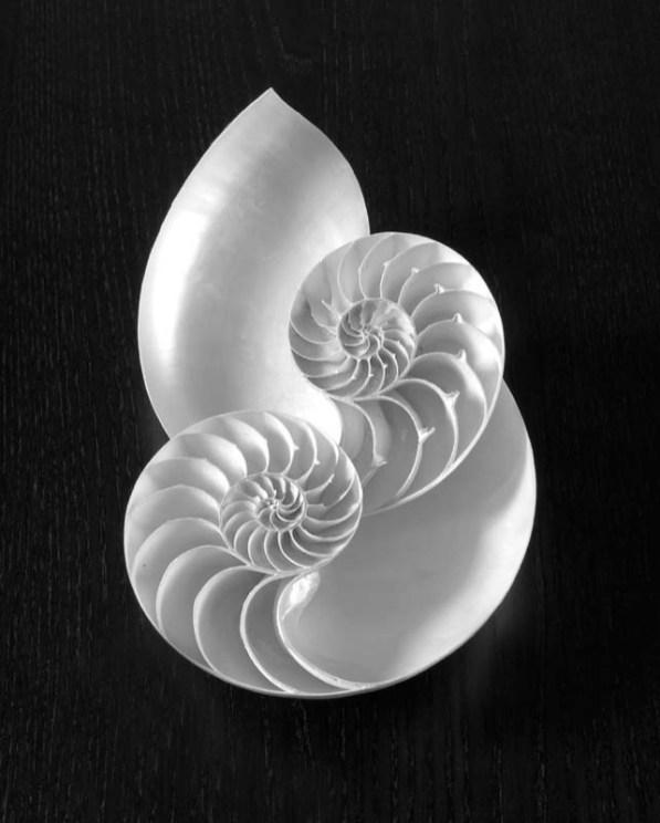 """""""Double Nautilus"""" by Robert Preston"""