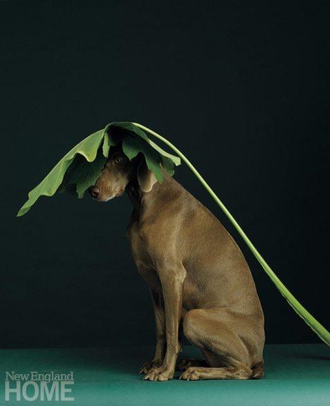 Leaf Line (2005), pigment print, 44″H × 36″W