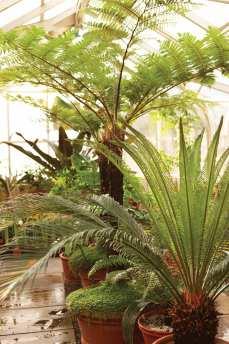A greenhouse holds tropical specimens.