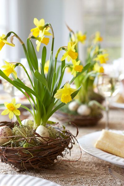 Daffodils in a nest