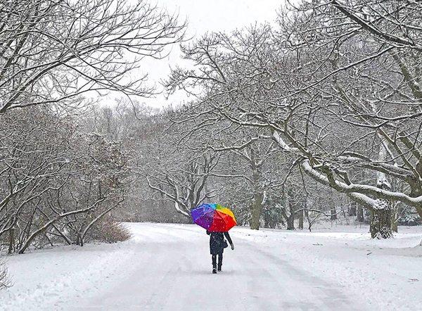 Arnold Arboretum in winter