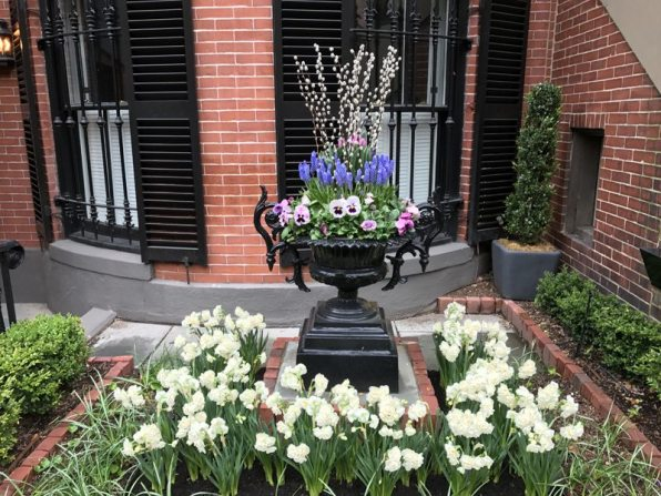 An early spring container bursting with Bridal Crown narcissus, viola, pansies, squil, tulips, and willow. The planting in this urn will be rotated to reflect the season.