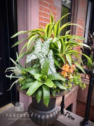 beautiful garden year long tropical plants