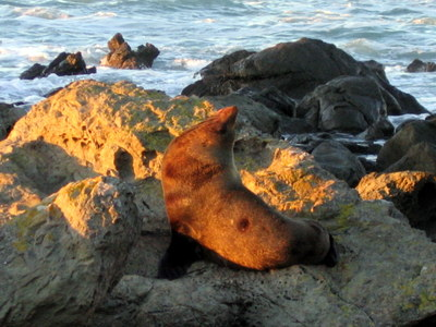 Seal stretching to feel the sun