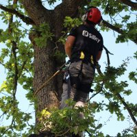 Expert Tree Climbers