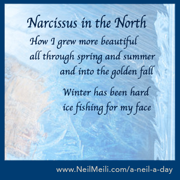 How I grew more beautiful all throughspring and summer            and into the golden fall              Winter has been hard             ice fishing for my face