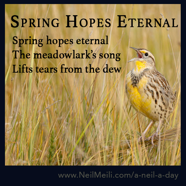 Spring hopes eternal The meadowlark's song Lifts tears from the dew