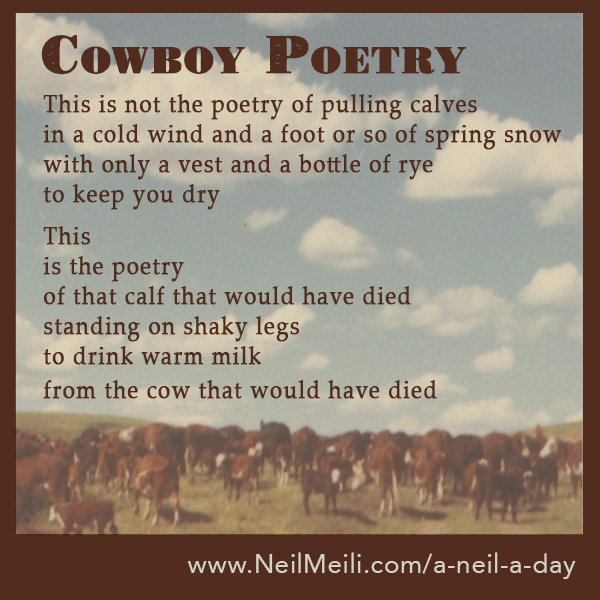 This is not the poetry of pulling calves in a cold wind and a foot or so of spring snow with only a vest and a bottle of rye to keep you dry  This is the poetry of that calf that would have died standing on shaky legs to drink warm milk from the cow that would have died