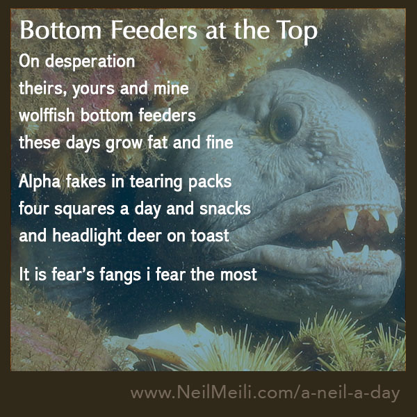 On desperation theirs, yours and mine wolffish bottom feeders these days grow fat and fine  Alpha fakes in tearing packs four squares a day and snacks and headlight deer on toast  It is fear's fangs i fear the most