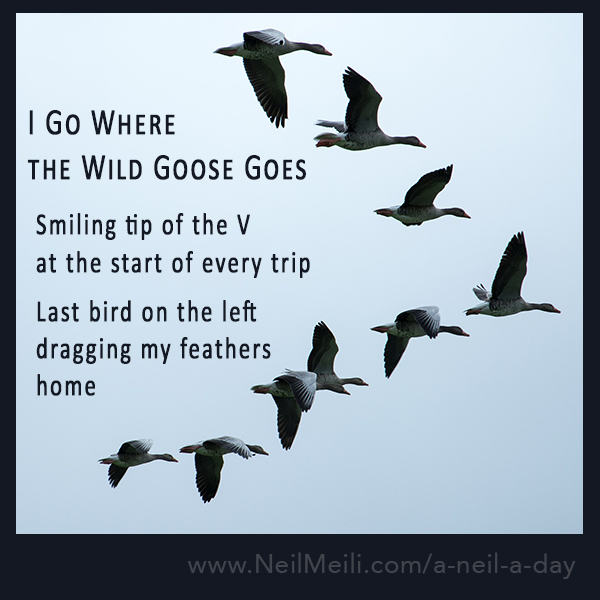 Smiling tip of the V at the start of every trip Last bird on the left dragging my feathers home