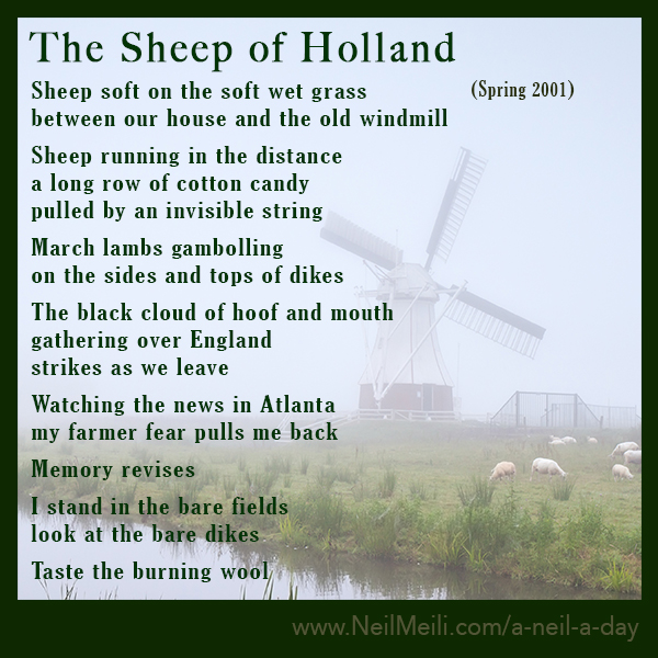 Sheep soft on the soft wet grass between our house and the old windmill  Sheep running in the distance a long row of cotton candy pulled by an invisible string  March lambs gambolling on the sides and tops of dikes  The black cloud of hoof and mouth gathering over England strikes as we leave  Watching the news in Atlanta my farmer fear pulls me back  Memory revises  I stand in the bare fields look at the bare dikes  Taste the burning wool