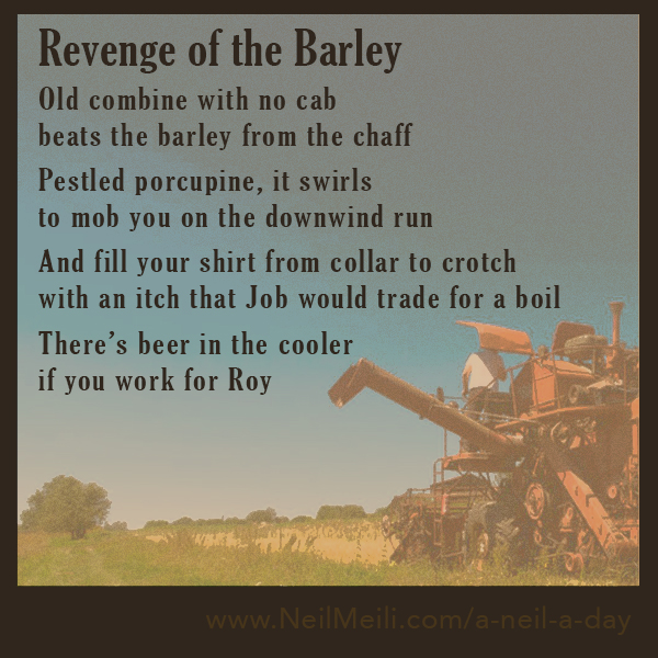 Old combine with no cab beats the barley from the chaff Pestled porcupine it swirls to mob you on the downwind run And fill your shirt from collar to crotch with an itch that Job would trade for a boil There's beer in the cooler if you work for Roy