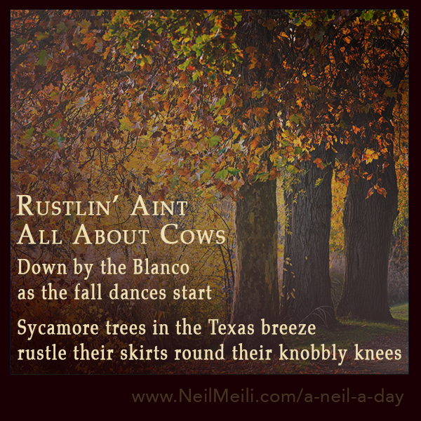 Down by the Blanco as the fall dances start Sycamore trees in the Texas breeze rustle their skirts round their knobbly knees