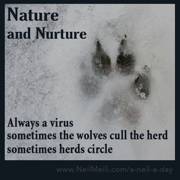 Always a virus sometimes the wolves cull the herd sometimes herds circle
