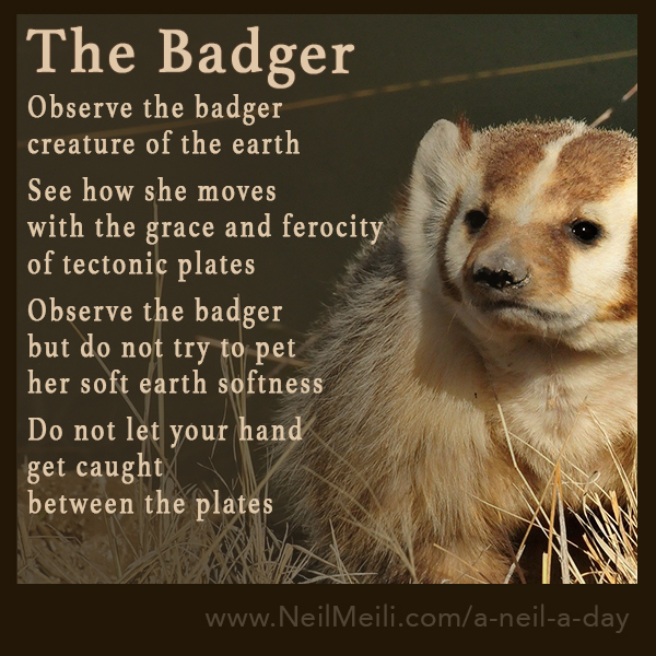 Observe the badger creature of the earth  See how she moves with the grace and ferocity of tectonic plates  Observe the badger but do not try to pet her soft earth softness  Do not let your hand get caught between the plates