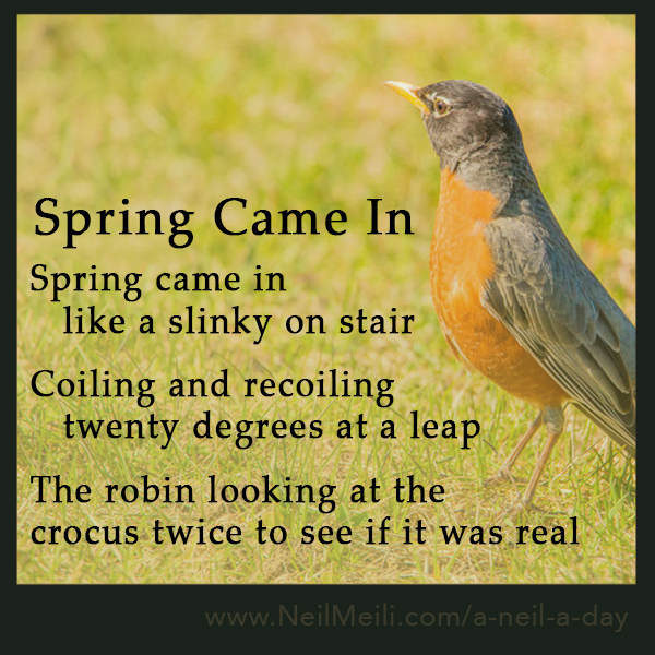 Spring came in    like a slinky on stair  Coiling and recoiling    twenty degrees at a leap  The robin looking at the  crocus twice to see if it was real