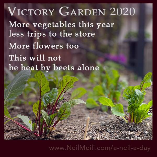 More vegetables this year less trips to the store  More flowers too  This will not  be beat by beets alone