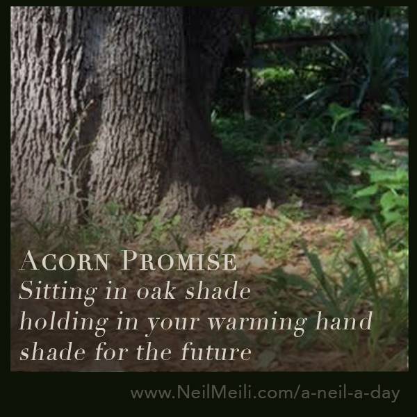 Sitting in oak shade holding in your warming hand shade for the future