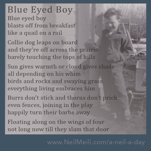 Blue eyed boy blasts off from breakfast  like a quail on a rail  Collie dog leaps on board and they're off across the prairie barely touching the tops of hills  Sun gives warmth or cloud gives shade all depending on his whim birds and rocks and swaying grass everything living embraces him  Burrs don't stick and thorns don't prick even fences, joining in the play happily turn their barbs away  Floating along on the wings of four not long now till they slam that door