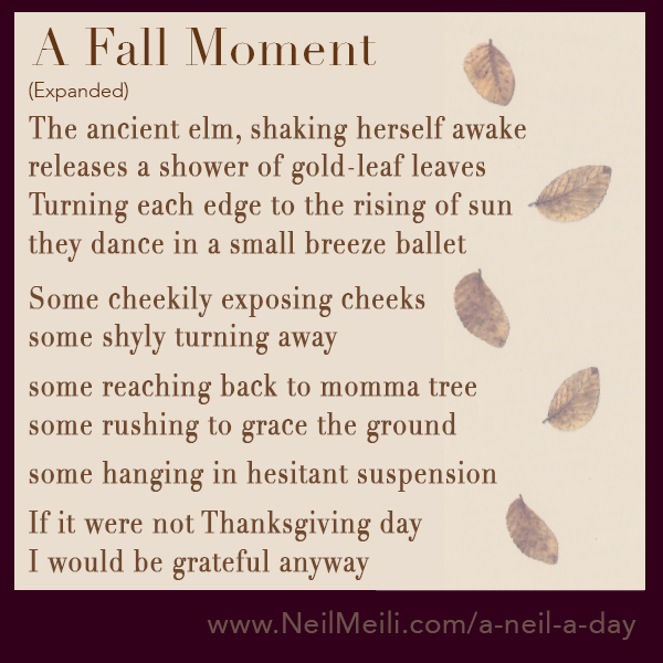 The ancient elm, shaking herself awake releases a shower of gold-leaf leaves Turning each edge to the rising of sun they dance in a small breeze ballet  Some cheekily exposing cheeks some shyly turning away  some reaching back to momma tree some rushing to grace the ground  some hanging in hesitant suspension  If it were not Thanksgiving day I would be grateful anyway