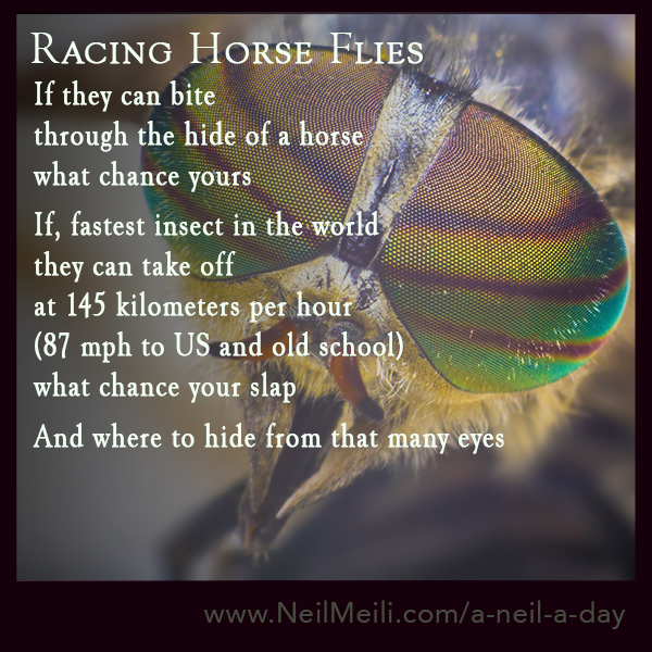 If they can bite  through the hide of a horse what chance yours   If, fastest insect in the world they can take off at 145 kilometers per hour (87 mph to US and old school)  what chance your slap   And where to hide from that many eyes