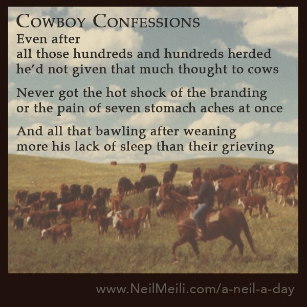 Even after all those hundreds and hundreds herded he'd not given that much thought to cows  Never got the hot shock of the branding or the pain of seven stomach aches at once  And all that bawling after weaning more his lack of sleep than their grieving
