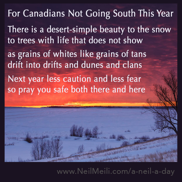 For Canadians Not Going South This Year  There is a desert-simple beauty to the snow to trees with life that does not show  as grains of whites like grains of tans drift into drifts and dunes and clans  Next year less caution and less fear so pray you safe both there and here