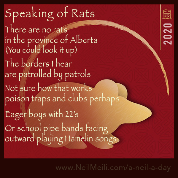 There are no rats in the province of Alberta (You could look it up)  The borders I hear are patrolled by patrols  Not sure how that works poison traps and clubs perhaps   Eager boys with 22's  Or school pipe bands facing outward playing Hamelin songs