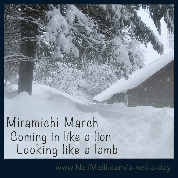 Miramichi March Coming in like a lion Looking like a lamb