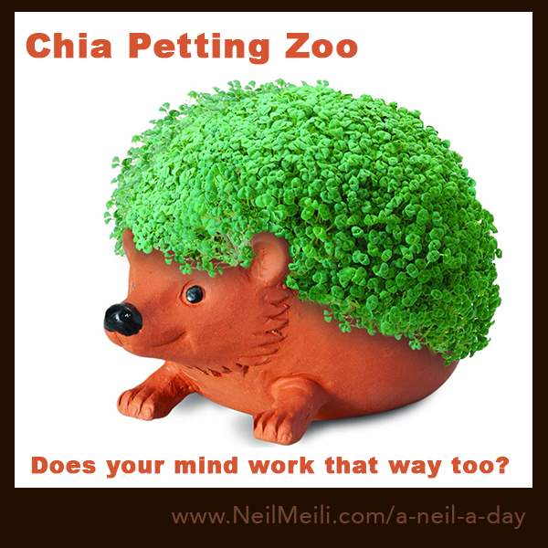 Chia petting zoo does your mind work that way too?