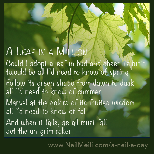 Could I adopt a leaf in bud and cheer its birth would be all I'd need to know of spring Follow its green shade from dawn to dusk  all I'd need to know of summer Marvel at the colours of its fruited wisdom all I'd need to know of fall And when it falls, as all must fall act the un-grim raker