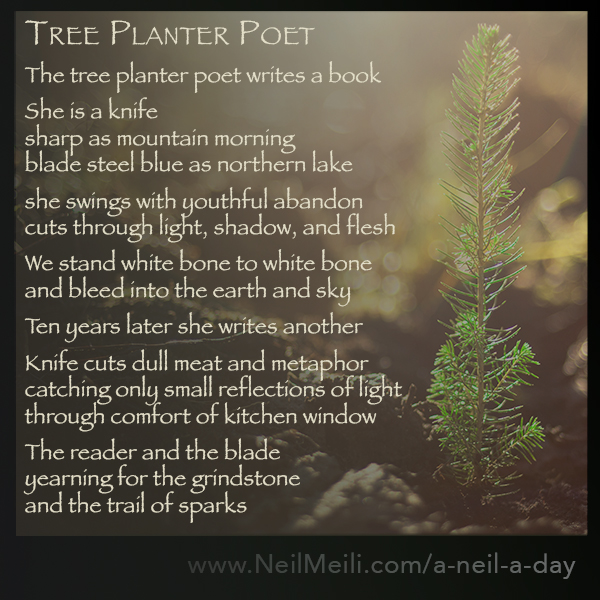 The tree planter poet writes a book  She is a knife  sharp as mountain morning blade steel blue as northern lake  she swings with youthful abandon cuts through light, shadow and flesh  We stand white bone to white bone and bleed into the earth and sky  Ten years later she writes another  Knife cuts dull meat and metaphor catching only small reflections of light  through comfort of kitchen window  The reader and the blade  yearning for the grindstone and the trail of sparks