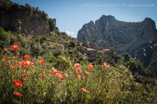 Poppies were the theme of the weekend. Overlooking Abella de la Conca