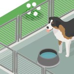 How To Build A Concrete Base For Dog Kennels & Runs