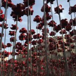 Planting Poppies at The Tower of London