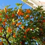 Seville 2018 – Day One – Oranges