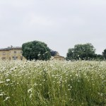 Staycation 2020 – Day Four – Basildon Park