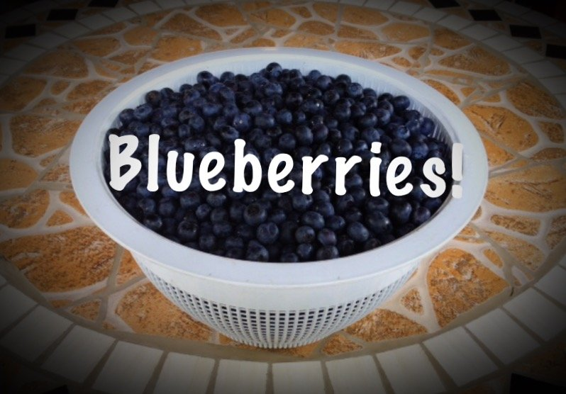 National Blueberry Month – a month to celebrate the blue gems