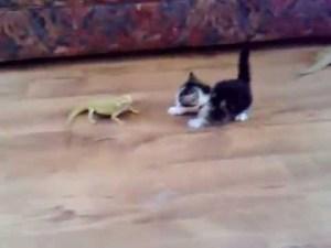 子猫、トカゲに出会う…